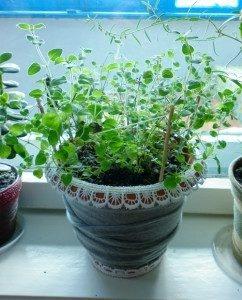 Растение в горшке на подоконнике