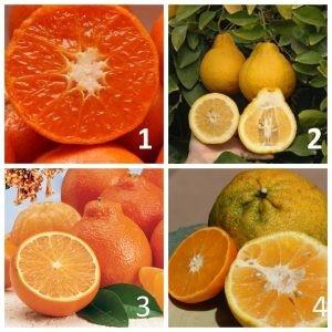 Виды мандарина